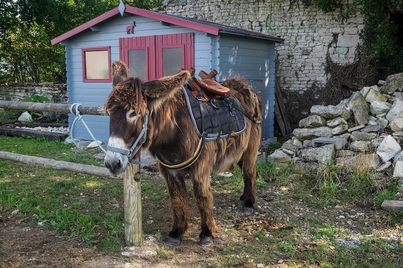 Âne du Poitou